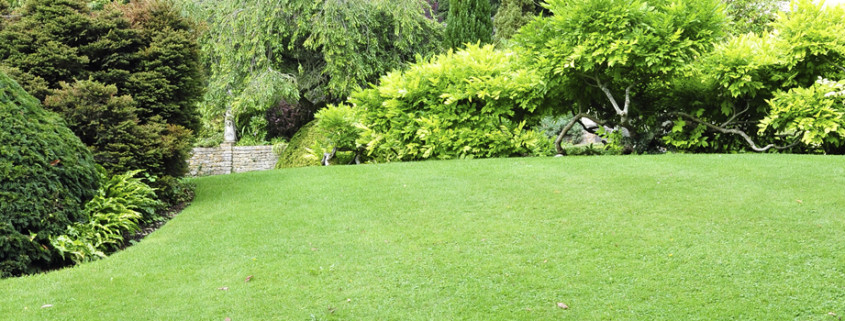 Landscapin - An Art of Creating and Maintaining Lawn